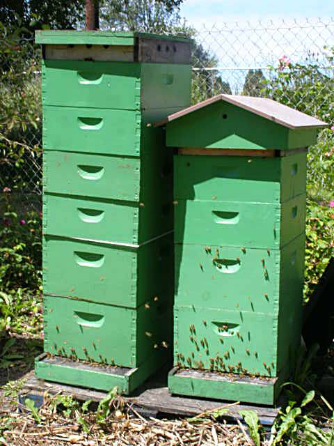 honey bee hives with supers on them, Oregon